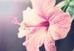 Flowers In Paradi...