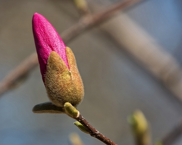 Sign of Spring