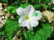 Happy St. Patrick...