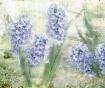 ~ Hyacinth Garden...