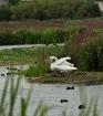 Wetlands garden