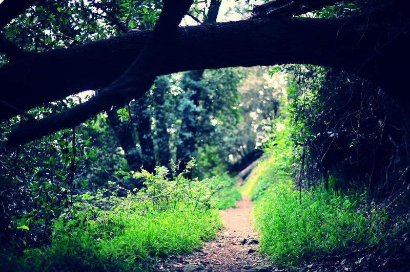 Secret Faerie Paths