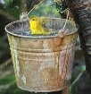 Bath in a bucket....