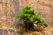 Rock Wall Tree