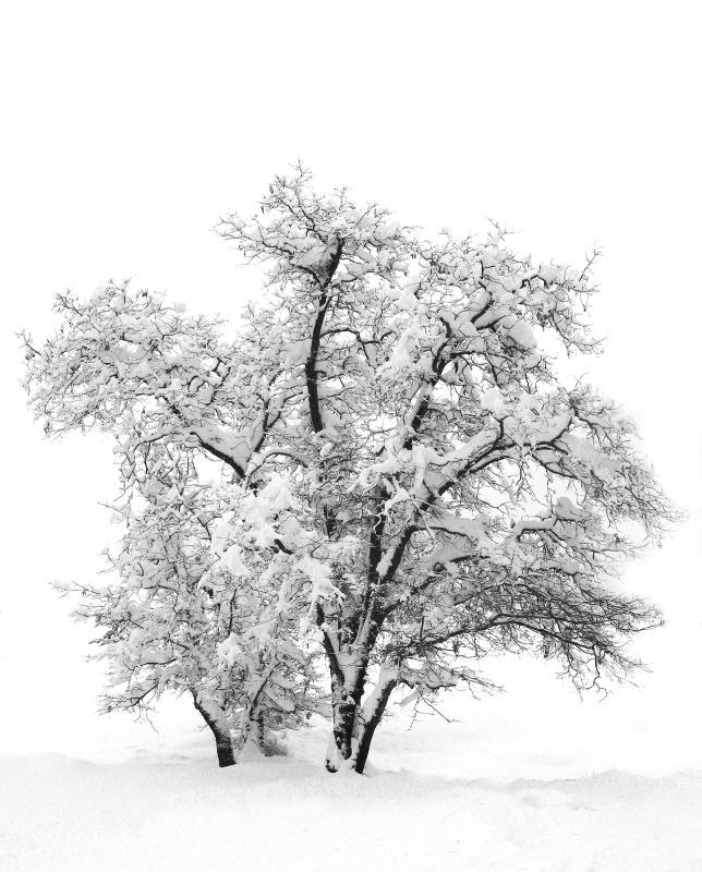 Serenity - ID: 12843540 © Laura Wald