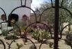 st. xavier cactus...