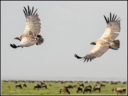 Flying Duo