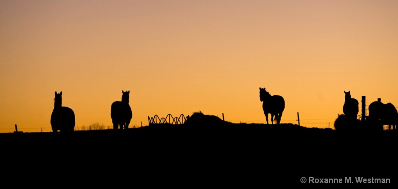 Horses at Sunrise - ID: 12860198 © Roxanne M. Westman