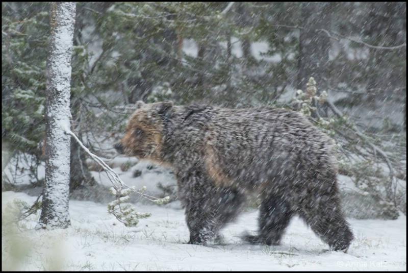 walking in the snow - ID: 12862816 © Annie Katz