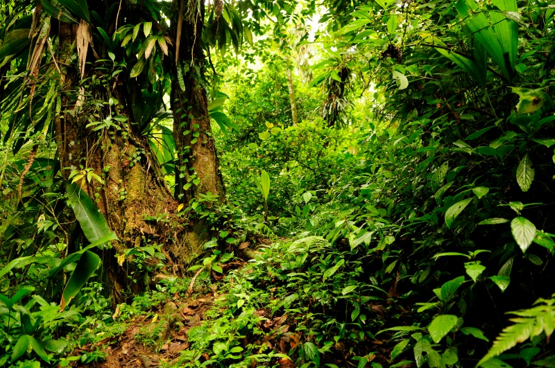 The Jungle Path - ID: 12865338 © Denise Aulie