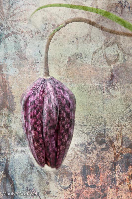Alice's Garden Flower