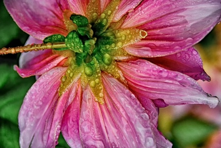 Pink in the rain