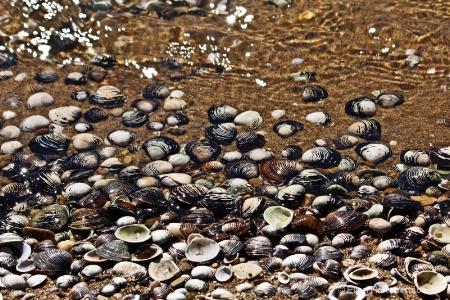 river shells