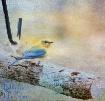 ~ Bluebird of Hap...