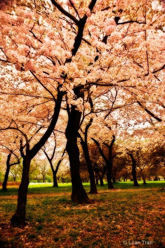 Spring Time - ID: 12874025 © Loan Tran