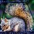 © Tony Pecorella PhotoID # 12876786: STEALING BIRD SEEDS