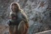monkey temple, ja...