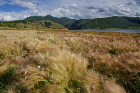 The Grasses Beside Eagle Nest Lake
