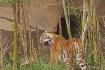 zoo 016