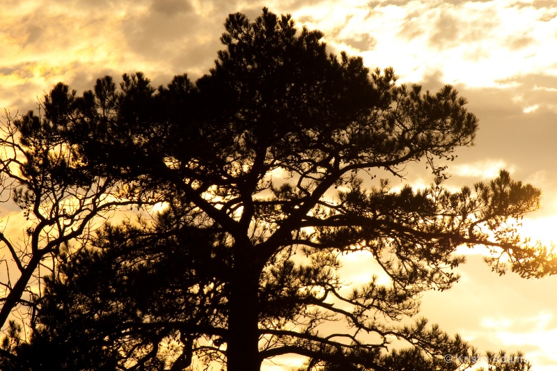 Backlit Tree at Sunset