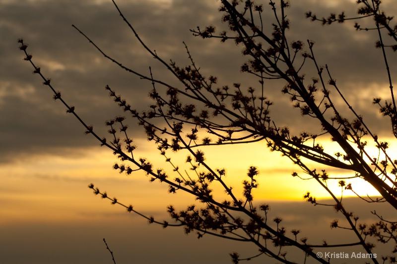 Spring Buds at Sunset