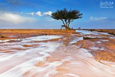 saudi landscape-3