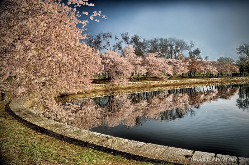 Cherry blossom reflections...