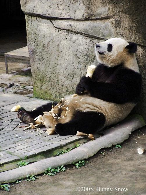 Day 16 Panda House in Chongqing Zoo