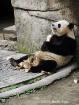 Day 16 Panda Hous...