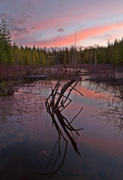 Holly Pond