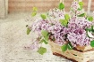 ~ Lilacs in a bas...