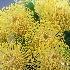 © Lynne Jett PhotoID # 12909291: The desert does bloom