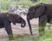 Elephant conversa...