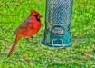 Mr. Cardinal.....