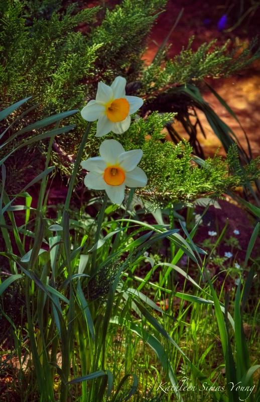 Sierra Spring Blooms