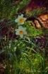 Sierra Spring Blo...