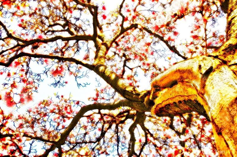 Spring Flame - ID: 12931279 © Loan Tran