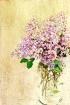 ~ Lilac ~