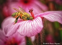 June 2014 Photo Contest 2nd Place Prize Winner