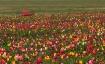 A Colorful Place ...