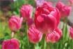 Spring Delites