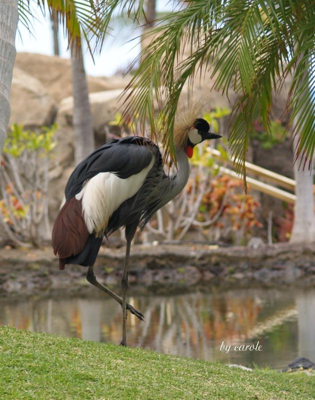 bird in paradise....