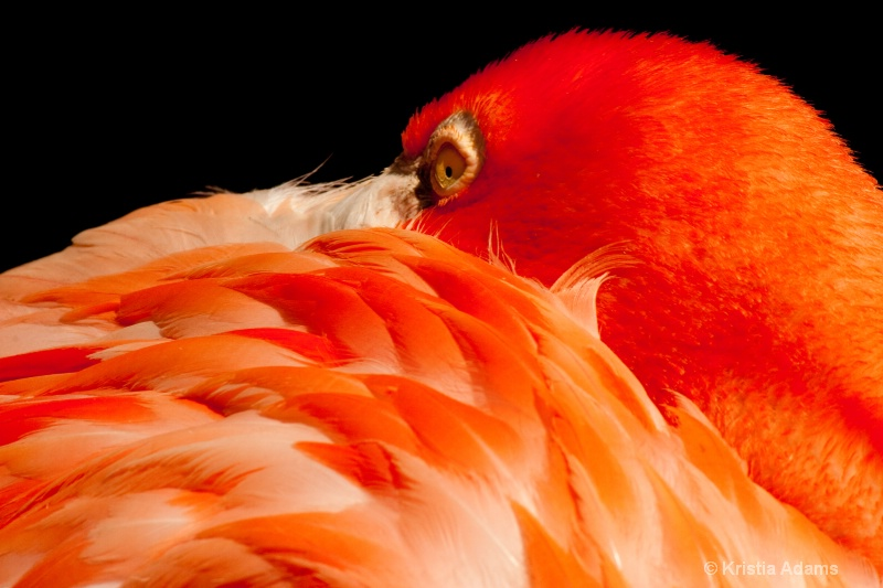 Beauty in Feathers
