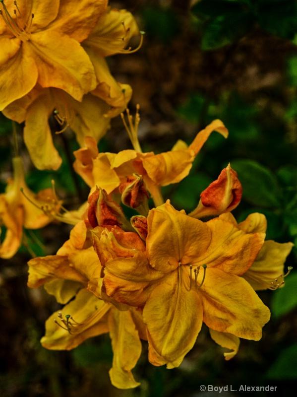 Golden Cascade....