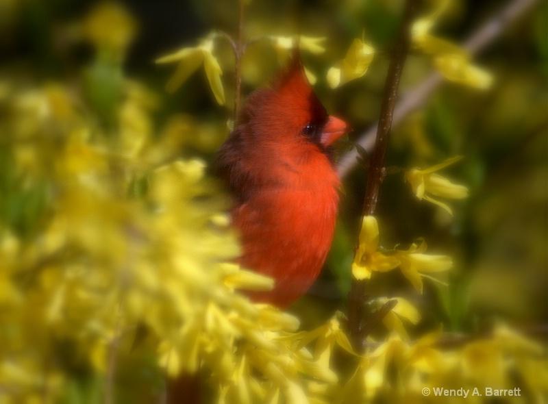Bird of HOPE - ID: 12962580 © Wendy A. Barrett