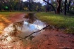 Bush puddles