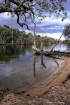 Swan River, Guild...