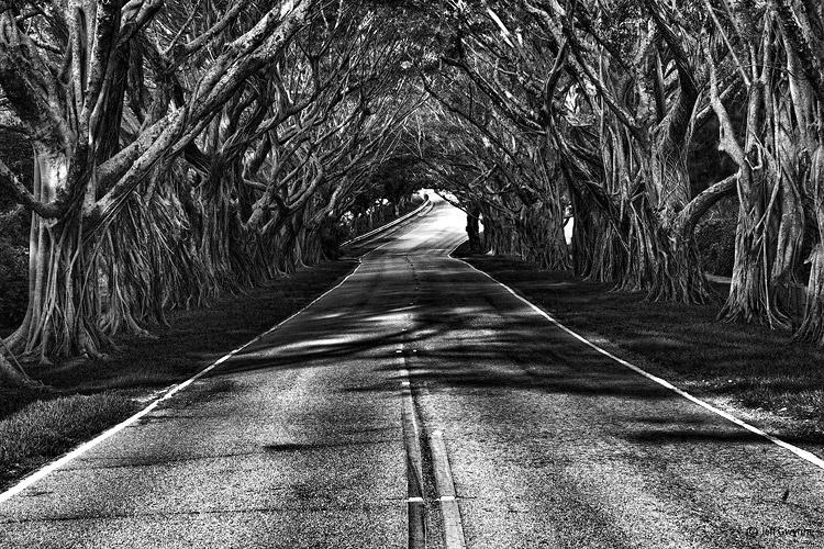Island Road - ID: 12966698 © Jeff Gwynne
