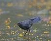 Bird at the strea...
