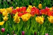 Royal Botanical G...